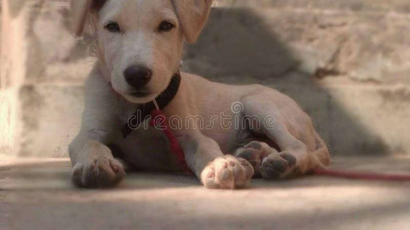 Doggy bonito imagem de stock royalty free