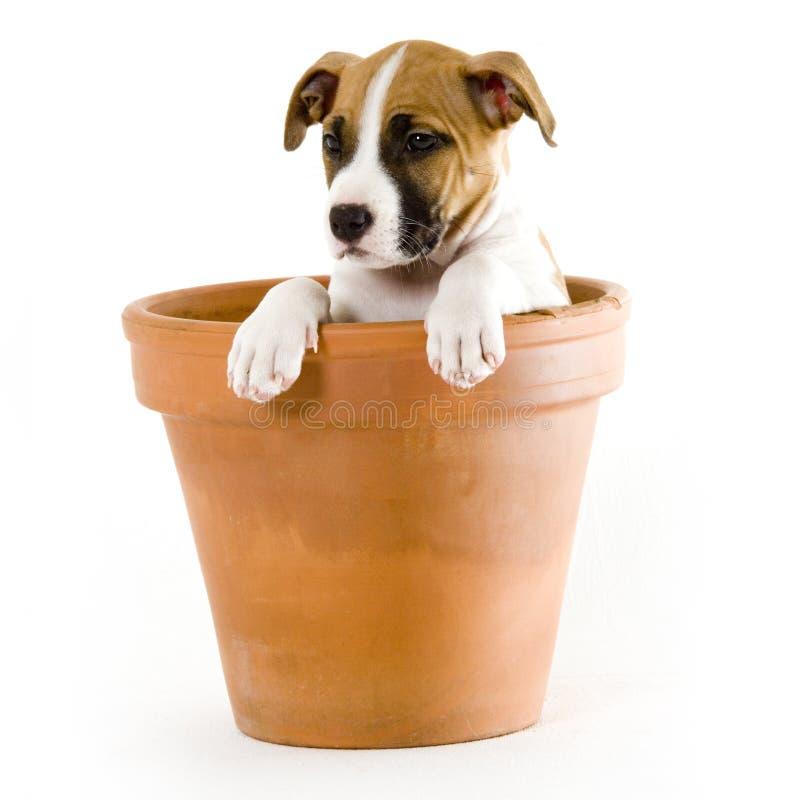 Doggy bonito foto de stock
