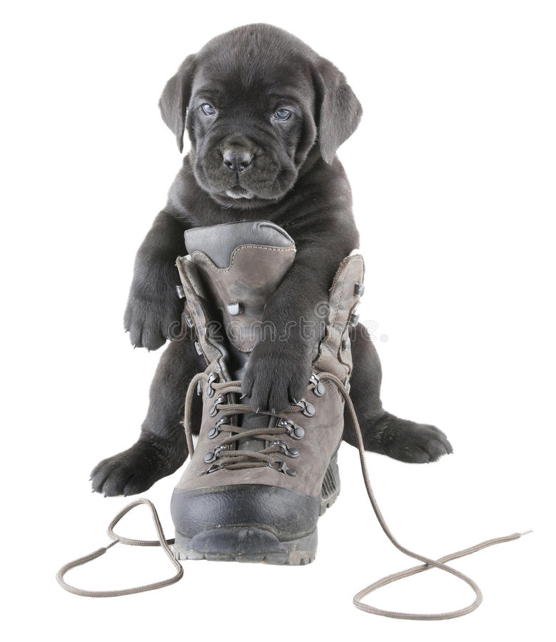 Doggy and boot stock photography