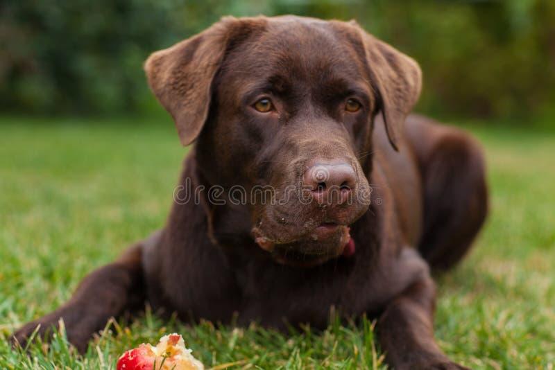 Doggy stock image