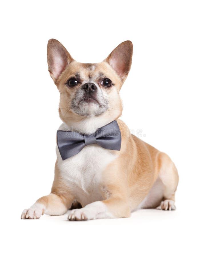Doggy de encontro com laço de curva fotografia de stock royalty free