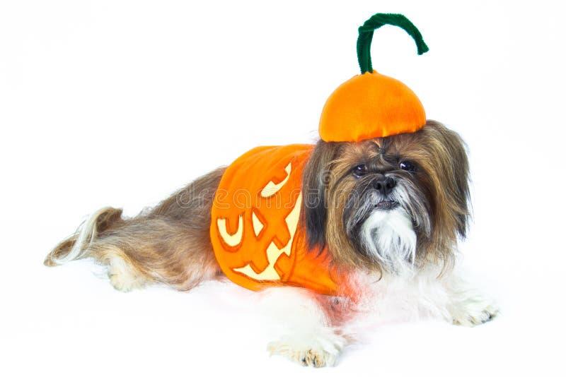 Doggy de Halloween imagem de stock royalty free