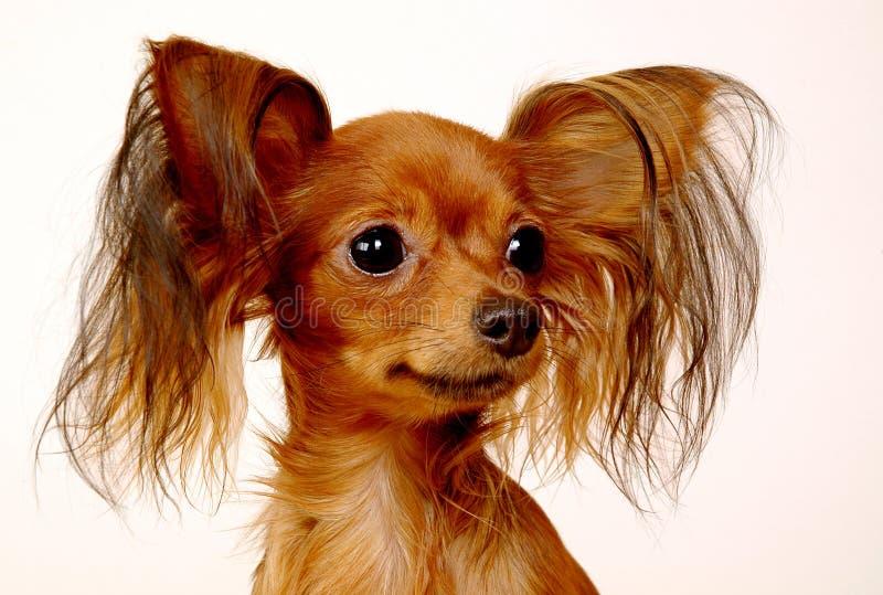 Doggy do brinquedo imagens de stock