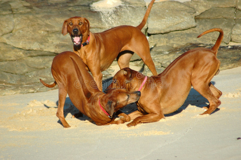 Doggy hierarchy stock image