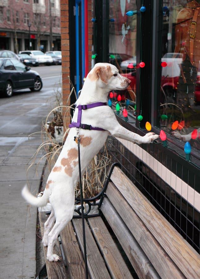 doggy ile okno obrazy royalty free