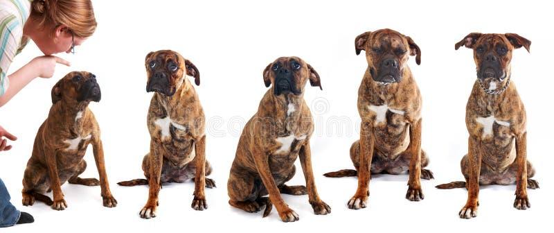 Doggy impertinente fotografie stock libere da diritti