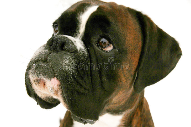 Doggy look royalty free stock photography
