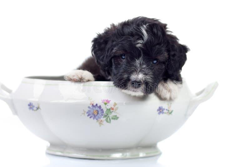 Doggy pequeno fotos de stock royalty free