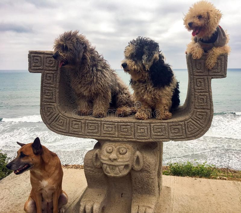 DOGGY PHOTO OP. Rescue dogs pose for photo in front of the ocean in Ecuador royalty free stock photos