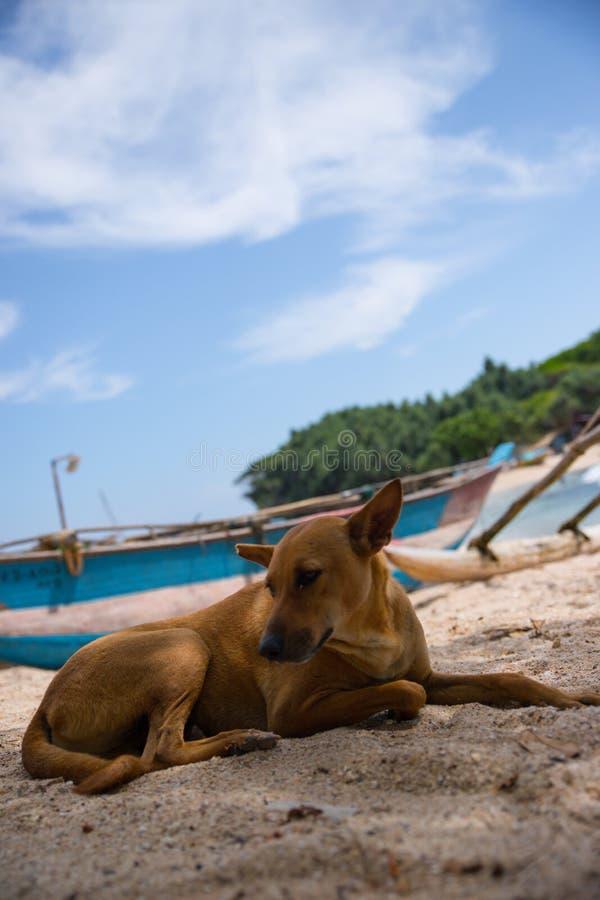 Doggy sulla spiaggia dell'isola fotografia stock libera da diritti