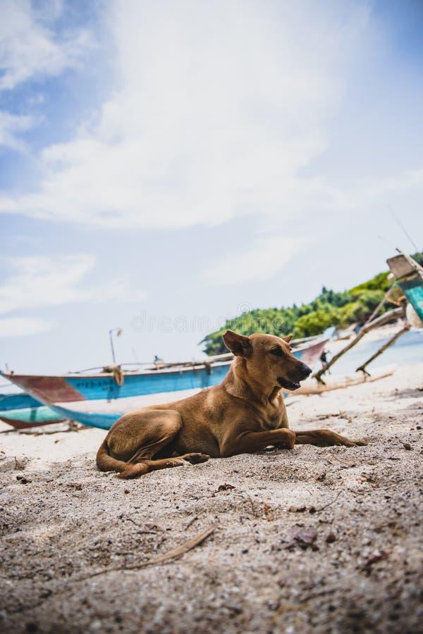 Doggy sulla spiaggia dell'isola immagini stock libere da diritti