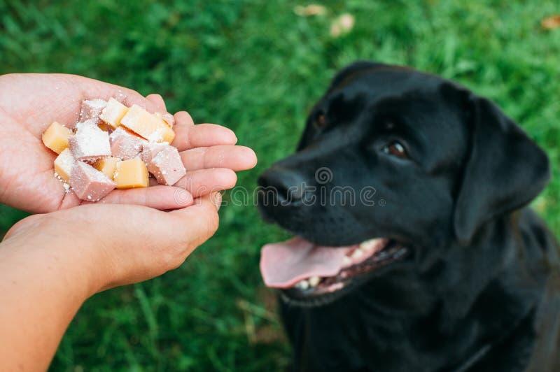 Doghunter: el hombre da la comida envenenada perro fotografía de archivo