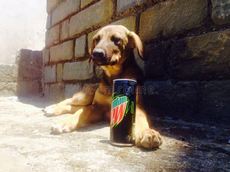 Dogie met zijn bergdauw stock afbeelding