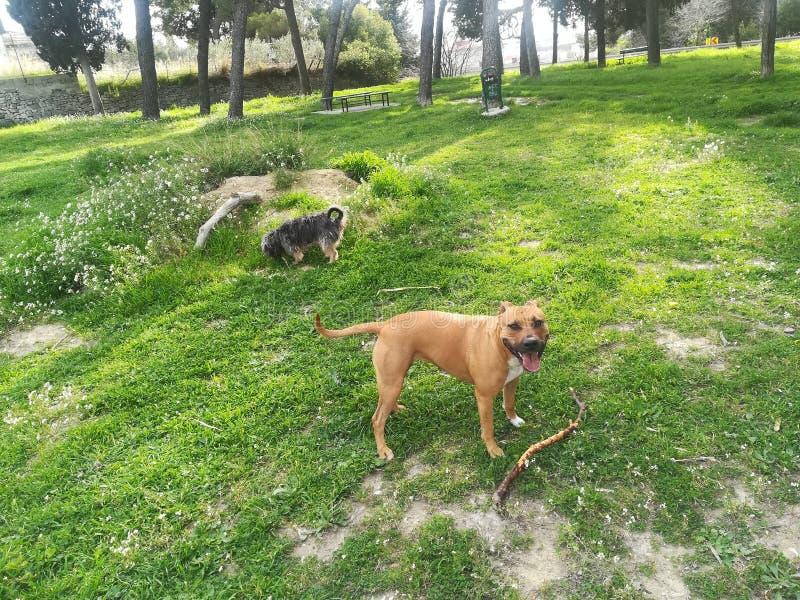 Doglovers stockfotos