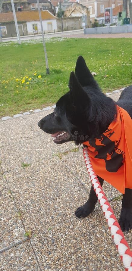 Dogo photos libres de droits
