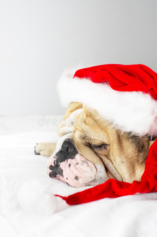 Dogo de la Navidad en un sombrero fotos de archivo libres de regalías