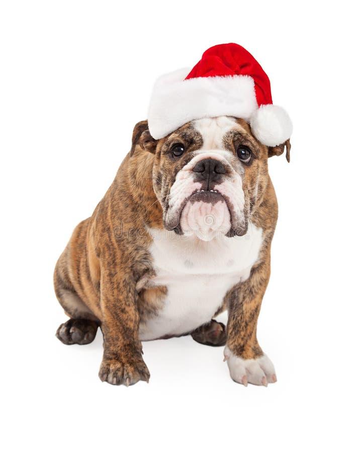 Dogo divertido que lleva a Santa Hat fotografía de archivo libre de regalías