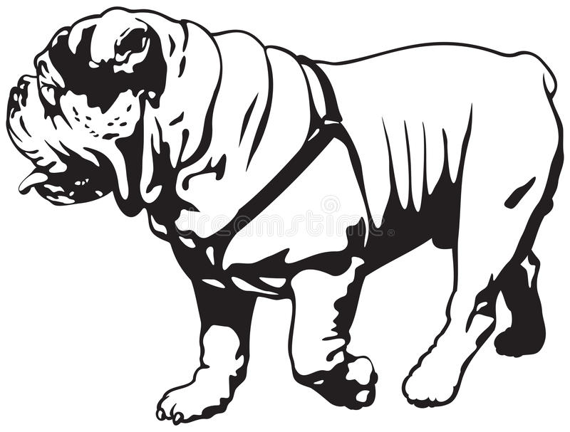 Dogo, dogo inglés o dogo británico ilustración del vector