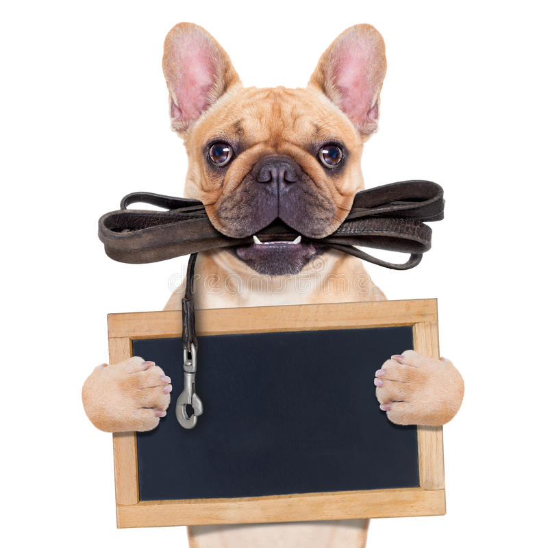 Dogo francés del cervatillo imagen de archivo