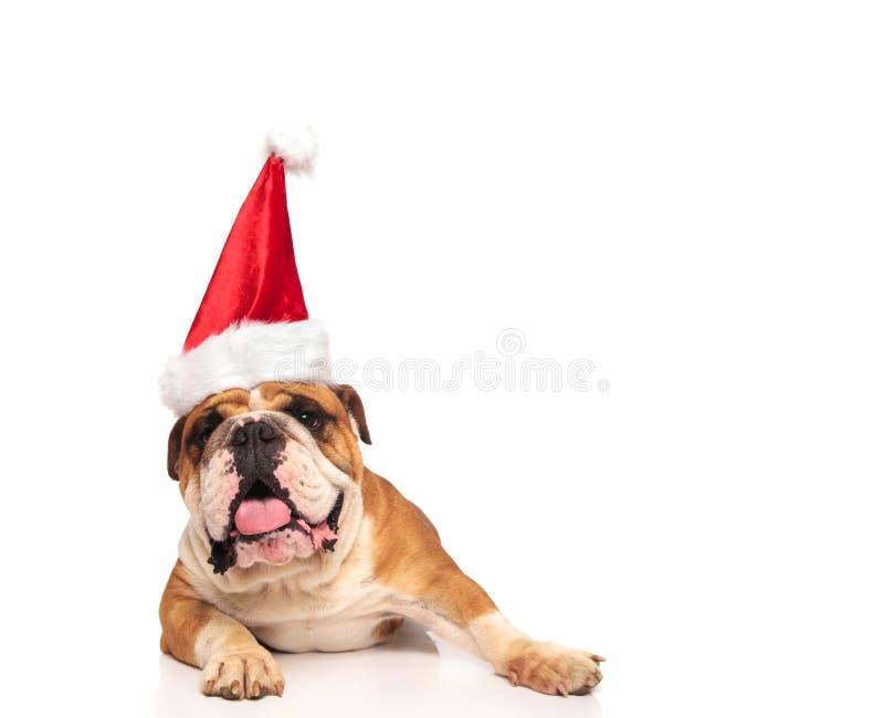 Dogo inglés feliz que lleva el sombrero de Papá Noel imágenes de archivo libres de regalías