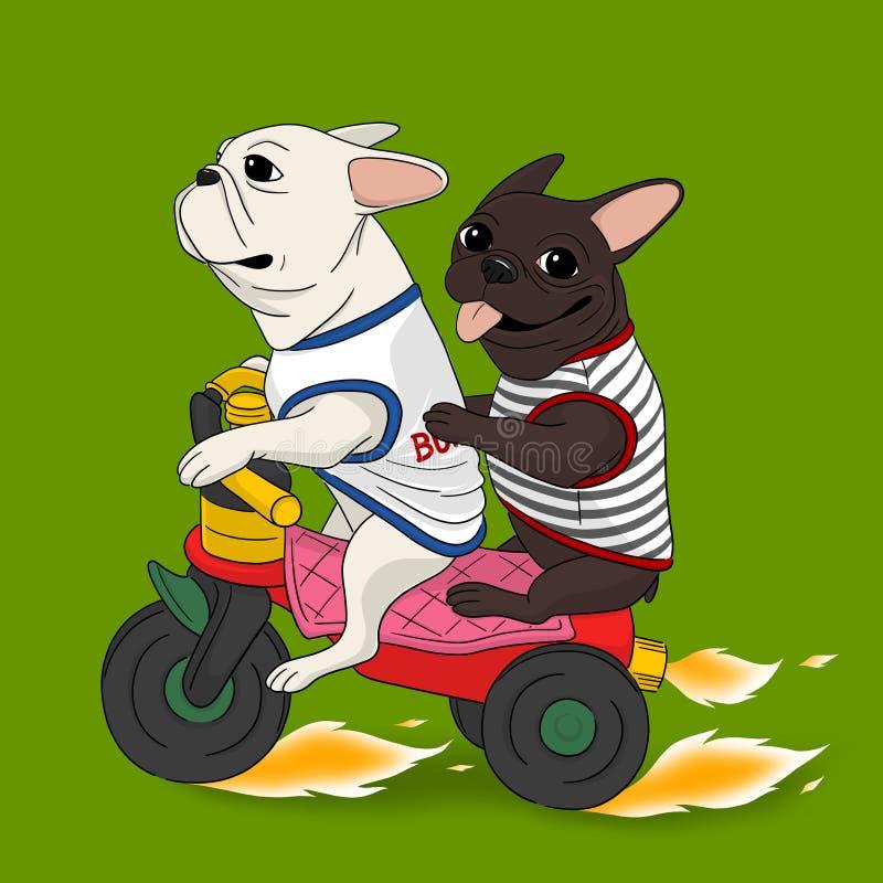 Dogos franceses en una bici ilustración del vector