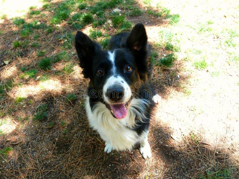 Dogpark friend: Synkro stock photo