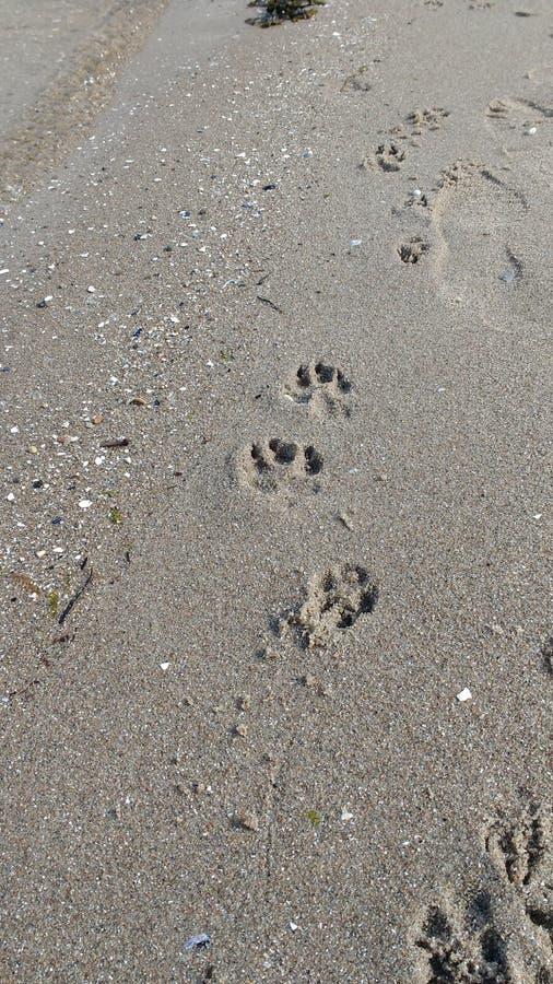 Dogprints auf dem Strand lizenzfreie stockfotografie