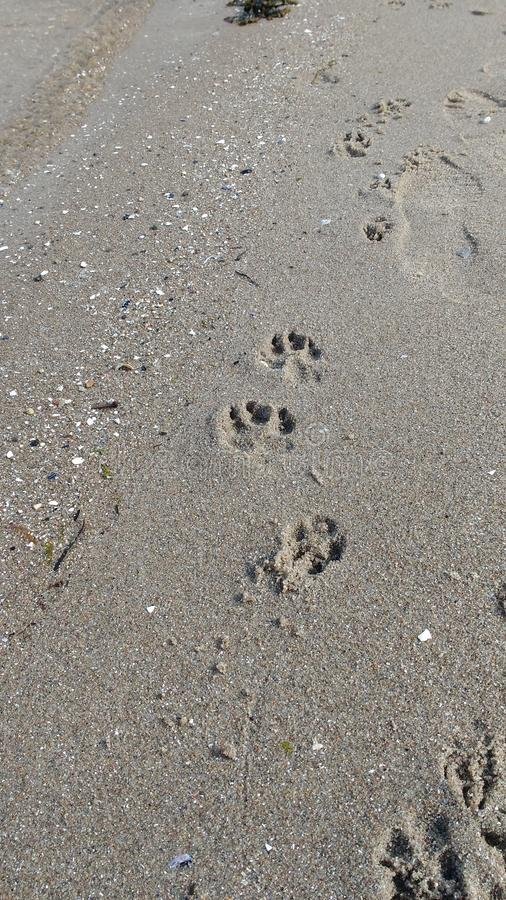 Dogprints op het strand royalty-vrije stock fotografie