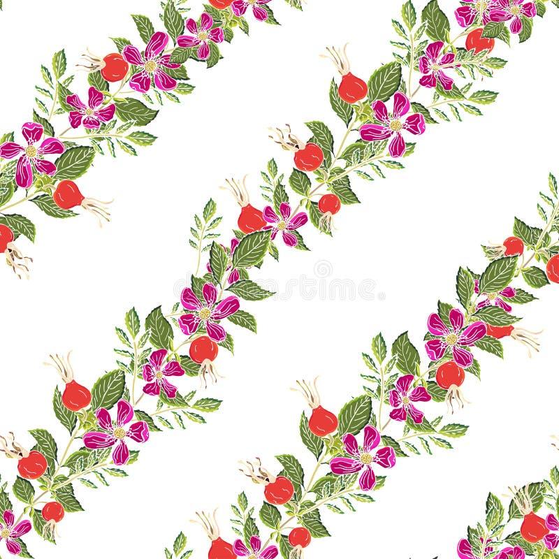 Dogrose莓果无缝的样式 与绿色叶子的传染媒介背景狂放的玫瑰色果子设计的标记糖浆,茶 皇族释放例证