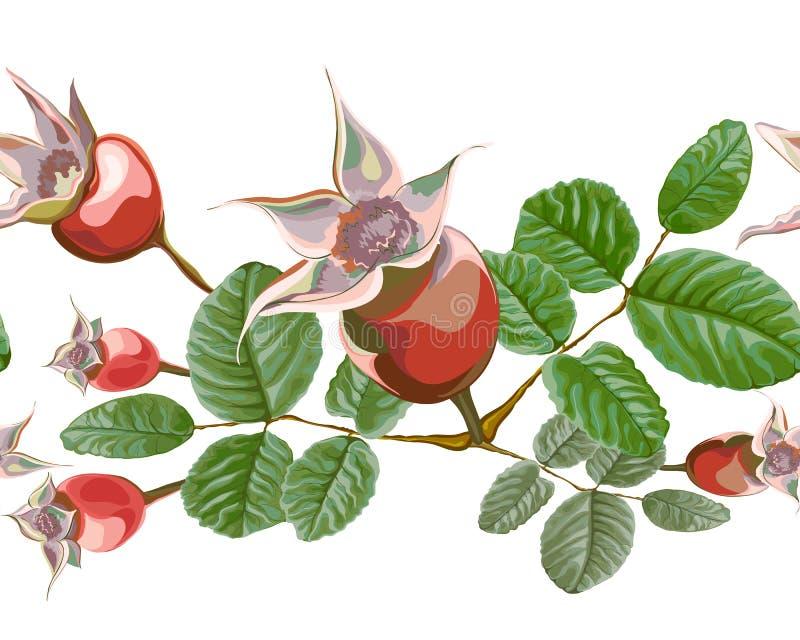 Dogrose bioder kwiatów arogancki muśnięcie royalty ilustracja