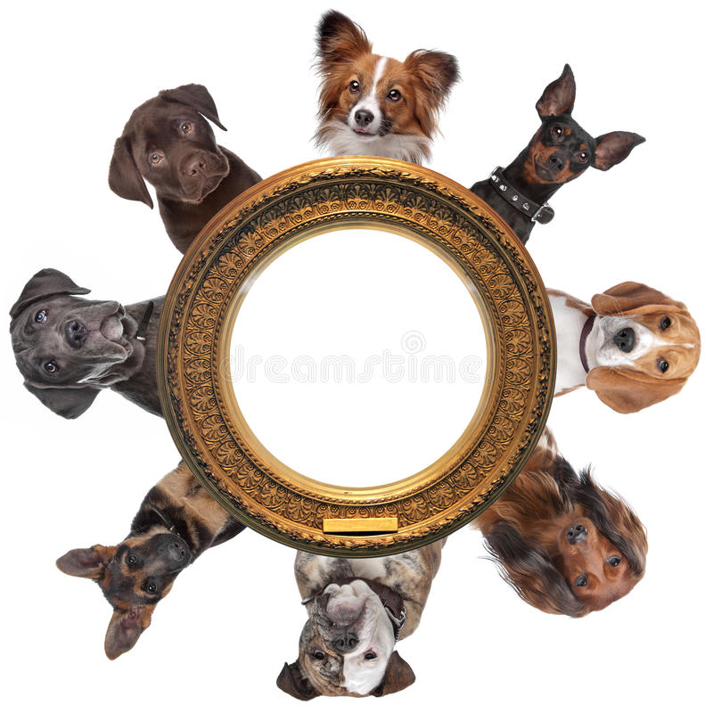 Dogs. Around around a golden picture frame royalty free stock photos