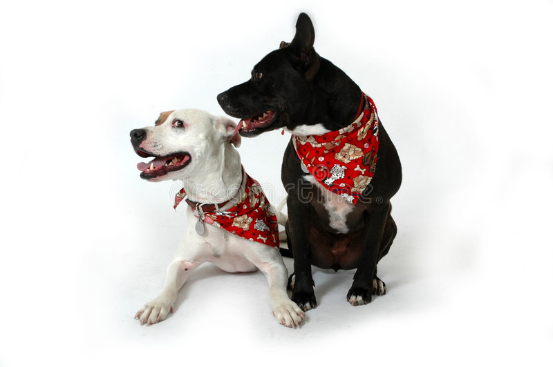 Dogs. Happy dogs making funny faces on white background