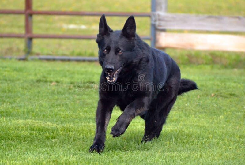 Dogs001 image libre de droits