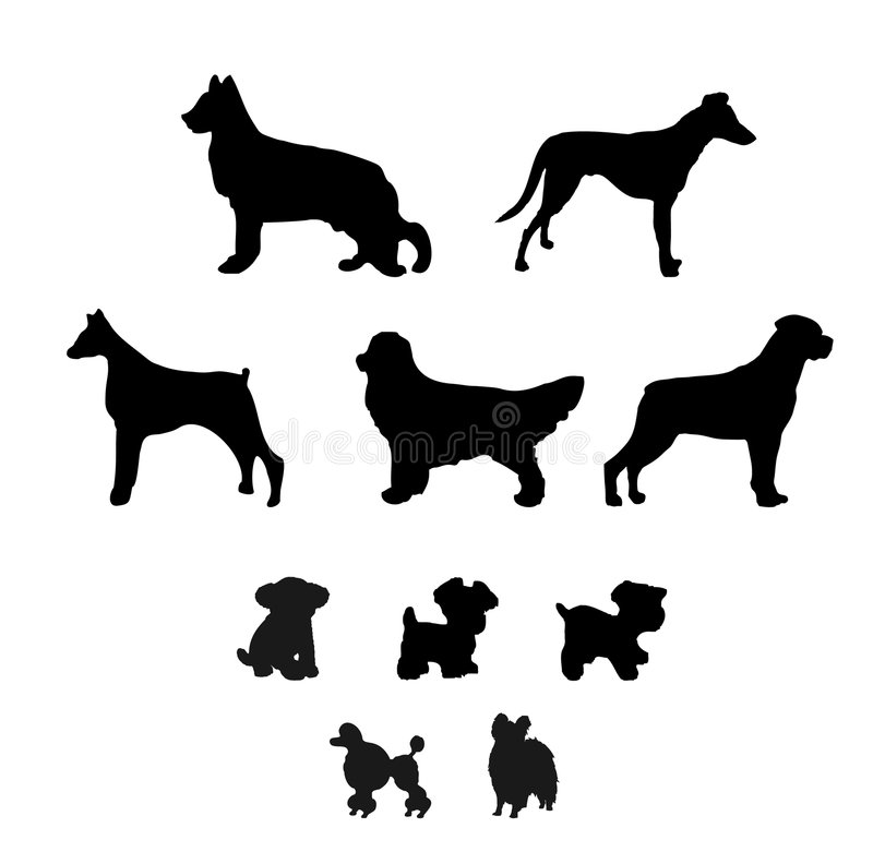 Free Dogs Stock Image - 9129321