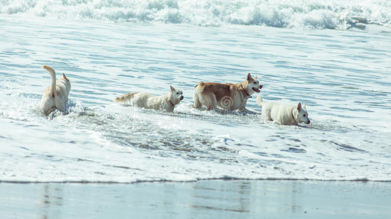 Dogs on the beach royalty free stock image
