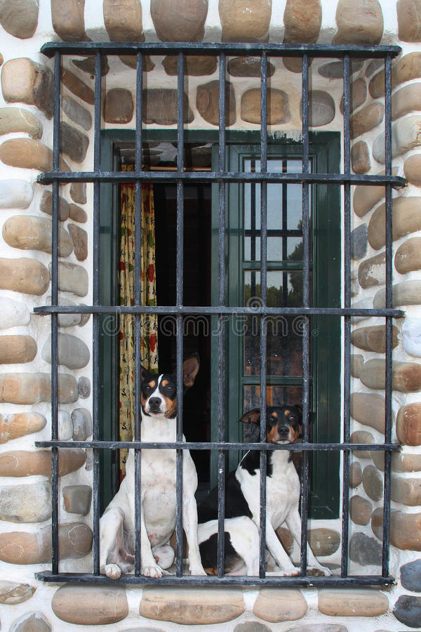 Dogs behind bars stock images