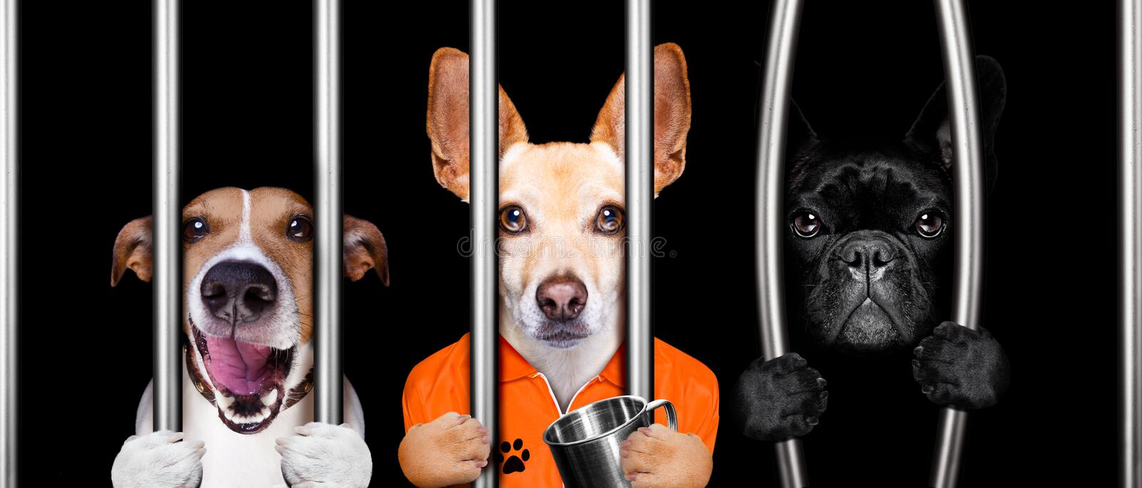 Dogs behind bars in jail prison stock images