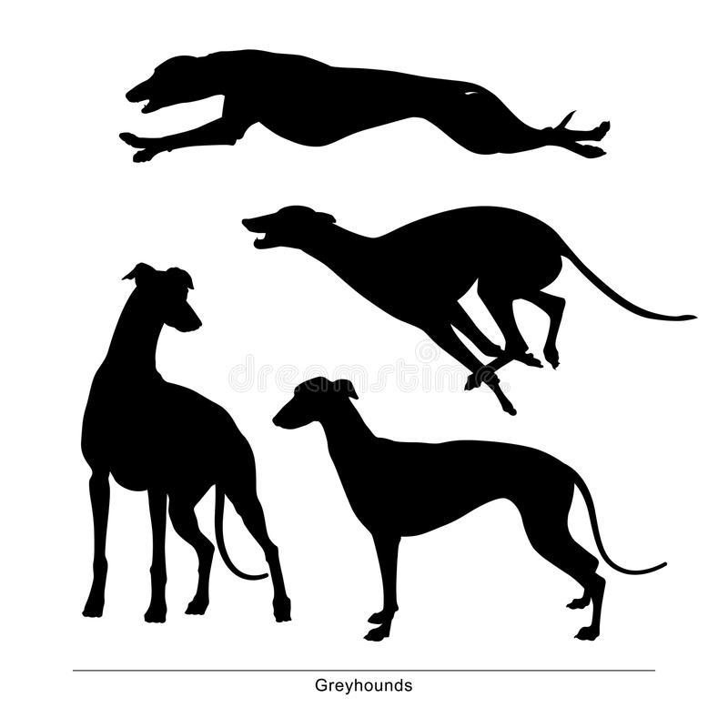 The dogs is big and small. Greyhounds royalty free illustration