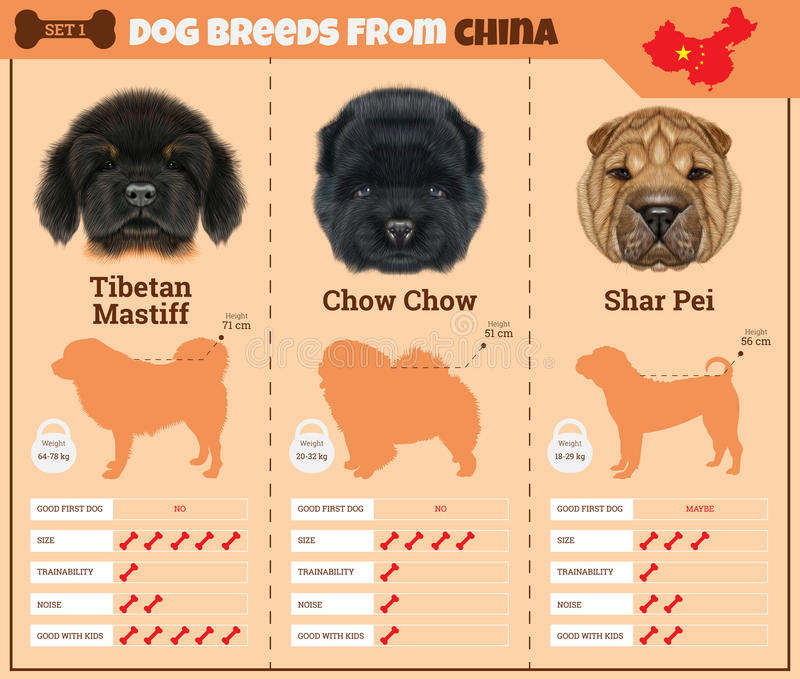 Dogs breed infographics types of dog breeds from China. stock images