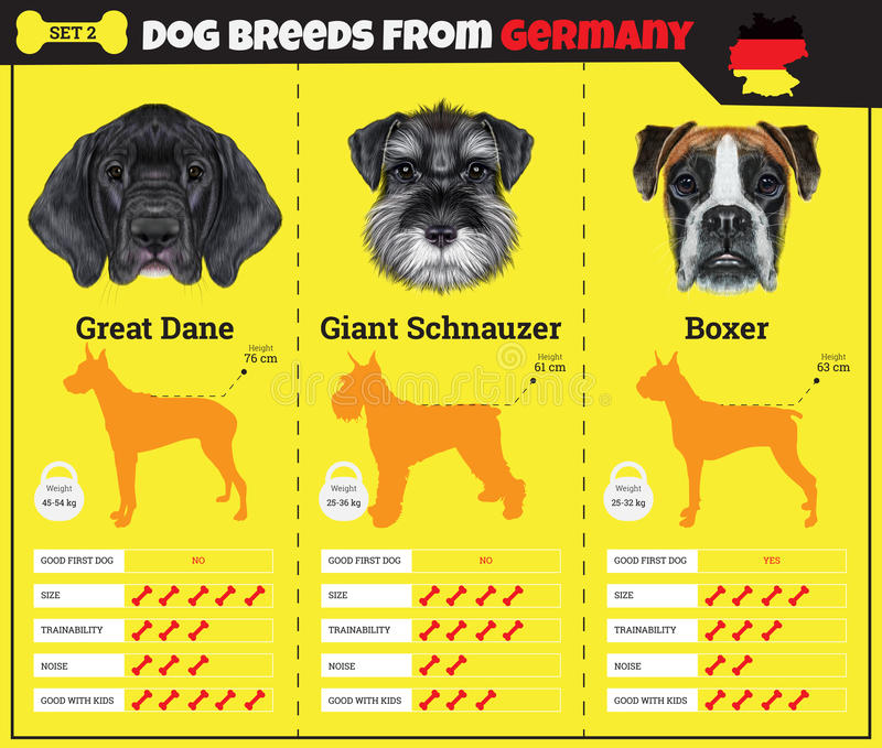 Giant Schnauzer Dog Breed Info