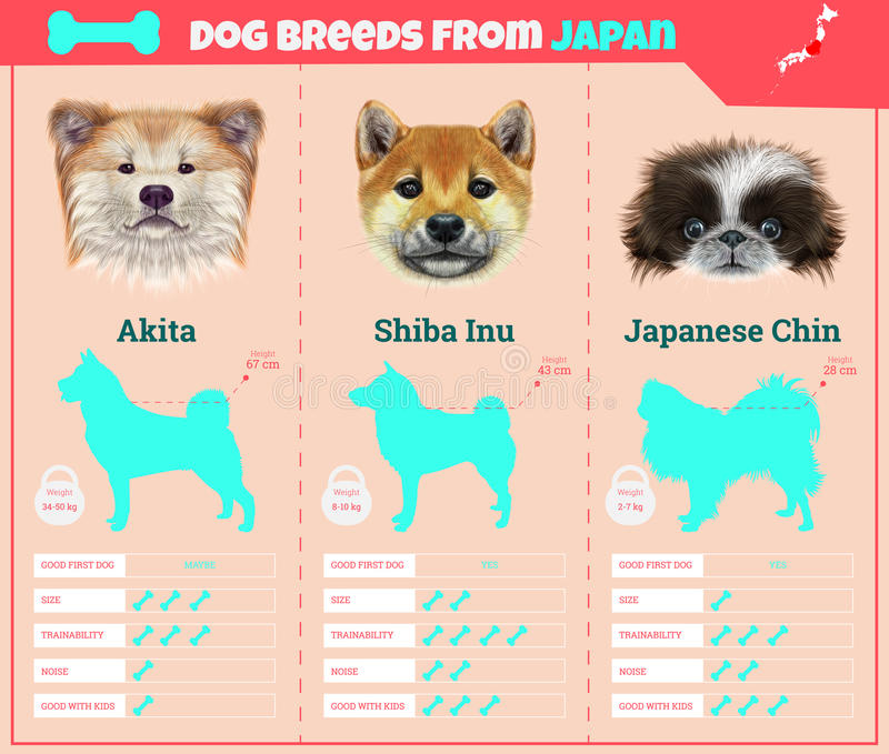 Dogs breed infographics types of dog breeds from Japan. royalty free stock images