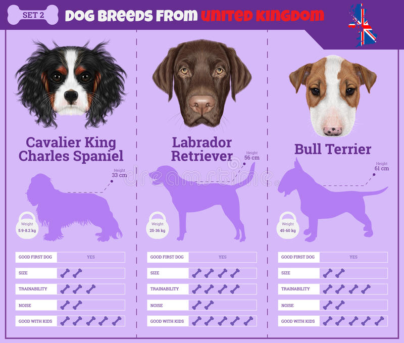 Dogs breed infographics types of dog breeds from United Kingdom. stock image