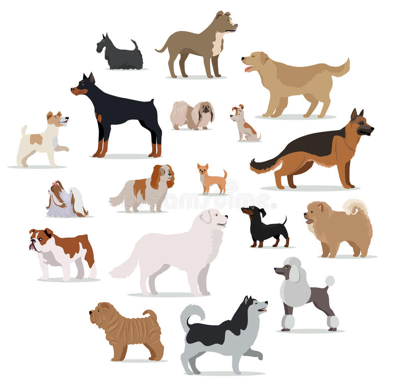 Dogs breed set in cartoon style on white stock vector for Different types of puppies breeds