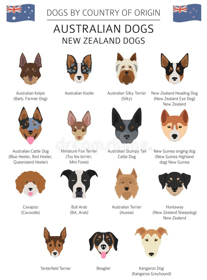 Free Dogs By Country Of Origin. Australian Dog Breeds, New Zealand Do Stock Image - 116334091