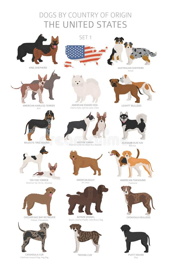 Free Dogs By Country Of Origin. Dog Breeds From The United States Of America. Shepherds, Hunting, Herding, Toy, Working And Service Stock Photo - 145645300