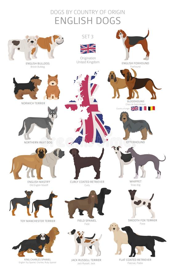 Free Dogs By Country Of Origin. English Dog Breeds. Shepherds, Hunting, Herding, Toy, Working And Service Dogs  Set Stock Photos - 145645213