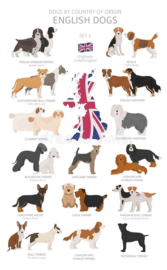 Free Dogs By Country Of Origin. English Dog Breeds. Shepherds, Hunting, Herding, Toy, Working And Service Dogs  Set Stock Photos - 145645293