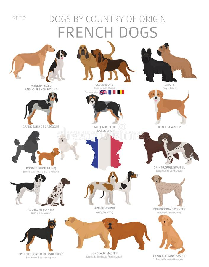 Free Dogs By Country Of Origin. French Dog Breeds. Shepherds, Hunting, Herding, Toy, Working And Service Dogs  Set Stock Image - 145645371