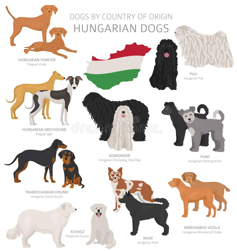 Free Dogs By Country Of Origin. Hungarian Dog Breeds. Shepherds, Hunting, Herding, Toy, Working And Service Dogs  Set Royalty Free Stock Image - 145645386