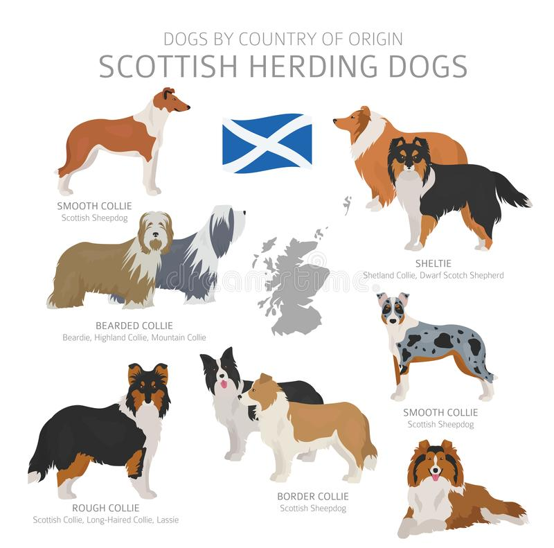Free Dogs By Country Of Origin. Scottish Dog Breeds. Shepherds, Hunting, Herding, Toy, Working And Service Dogs  Set Stock Images - 145645254